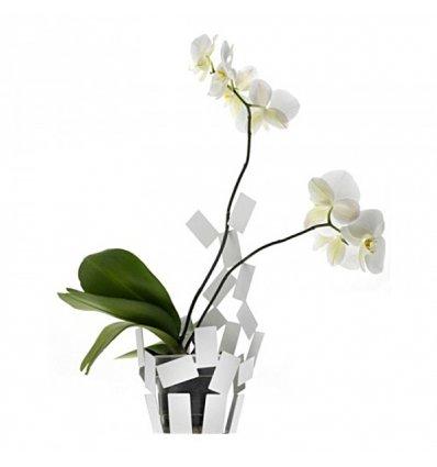 Vase cover - LA STANZA DELLO SCIROCCO - Alessi